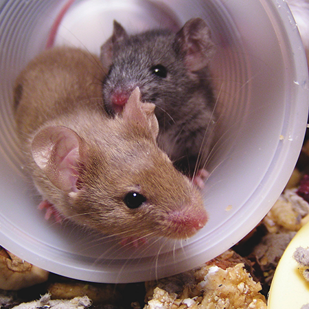 2 mice in a plastic cup